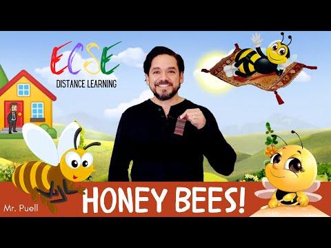 Mr Puell-Honey Bees