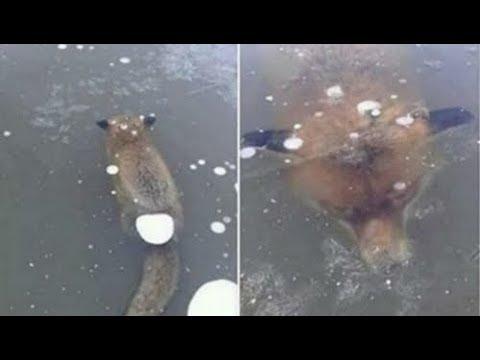 Buzda Aniden Donmuş 10 Şok Edici Hayvan.mp3