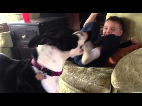 The dog tickles my kids feet