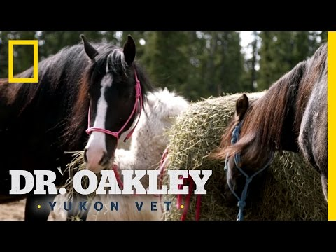 "A ""Well-Conditioned"" Horse 