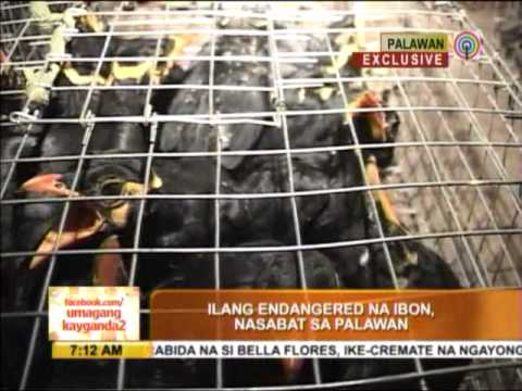 23 cages filled with parrots, mynas seized in Palawan