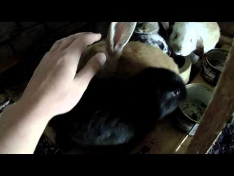Peaceful rabbits eating