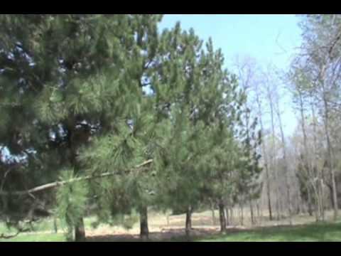 A Plant Health Professional's ODC pine tree testimony