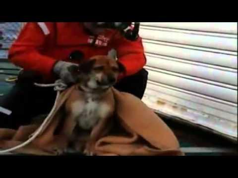 فيديو مؤثر سوف تبكى الكلب يعرف صاحبه سبحان الله Music Videos