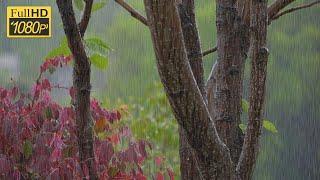 庭に降る雨の音でリラックスする1時間 - Relaxing from the rain in the garden -