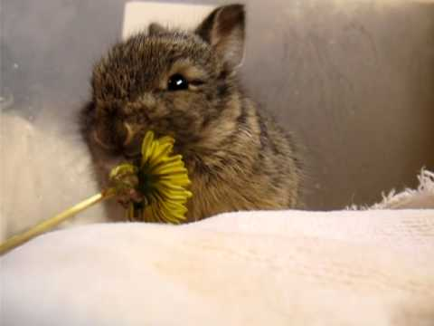 Mary Cummins, Animal Advocates, Baby bunny eats a tiny flower, washes its face
