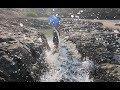 阿明赶海发现新的大水坑,打开抽水机器抽干,抓到好多值钱海货