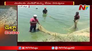 Aqua Farmers Incur Heavy Losses due to Summer Heat in West Godavari | NTV
