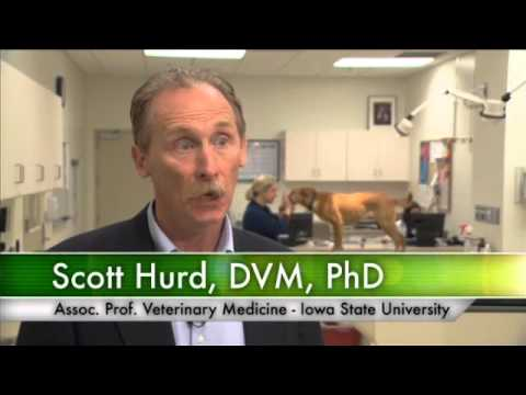 The Direct Relationship between Animal Health and Food Safety Outcomes