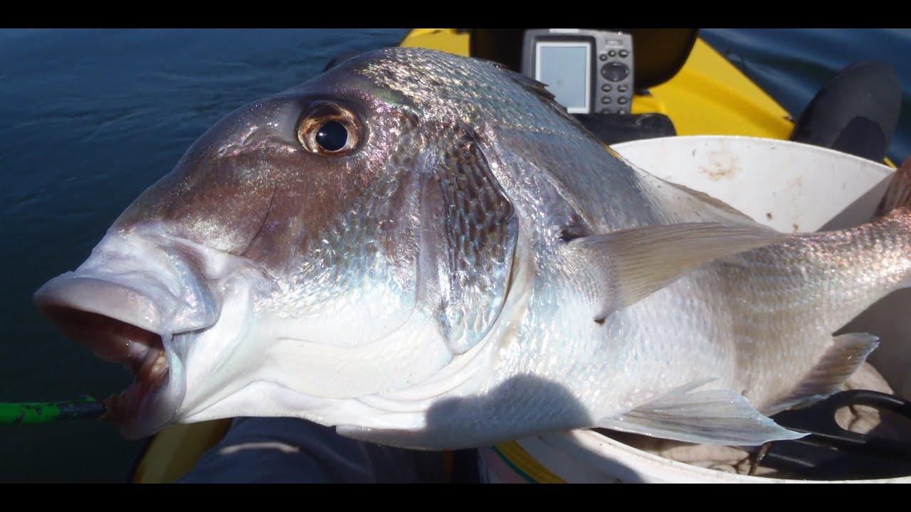 Jumbo porgy fishing on jigs youtube for John skinner fishing