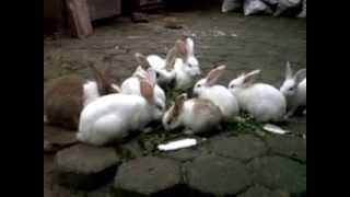 Baby Rabbits Feeding Time