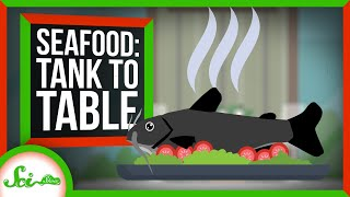 Tank to Table: How Scientists Make Bigger, Tastier Seafood