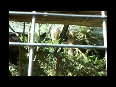 17-09-11 Assling (Austria) – Eravamo alla ricerca di Porcini e abbiamo visitato il parco naturale!!