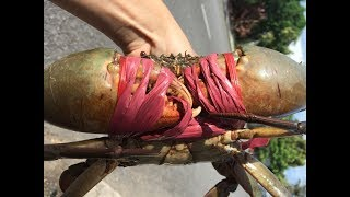 Ăn càng cua khổng lồ và tôm thẻ xào bơ tỏi / Eating big mud crab