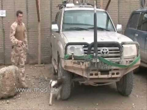 A man and his dog in Helmand Video