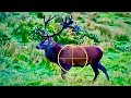 Hunting Red deer in New Zealand part 26
