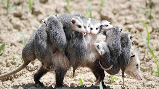 Cute And Loving Baby Animals With Their Mothers | Mother's love, Saving and Protecting Their Baby