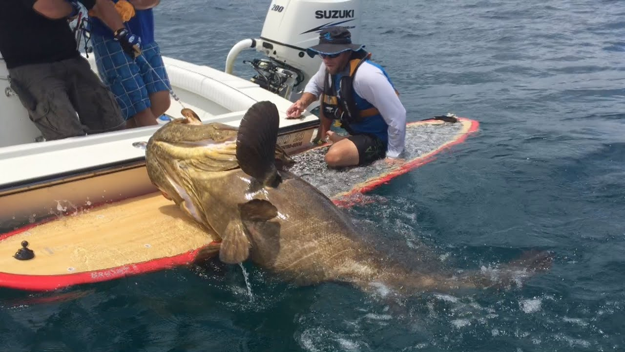 Check Out The Massive Fish This Paddle Boarder Pulled In