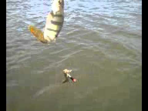 рыбалка на козу летом видео