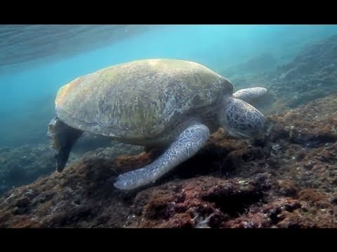 Protecting the Turtles of Taiwan - Greenpeace