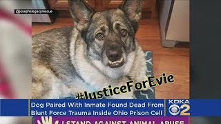 Dog In Prison Foster Program Found Dead In Cell Of 'Blunt Force Trauma'