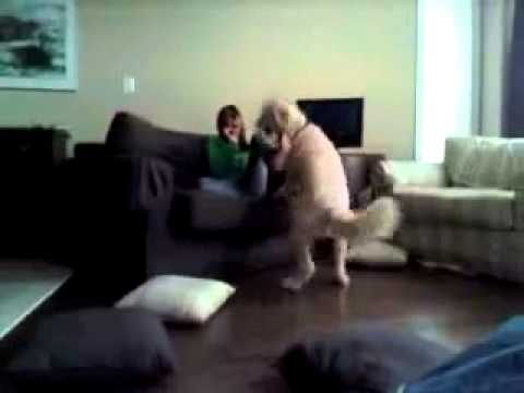Girl Raped By A Dog - Saved By Miracle!!! Lol!!! video