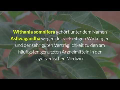 Withania somnifera (Ashwagandha): Wirkung und Anwendung