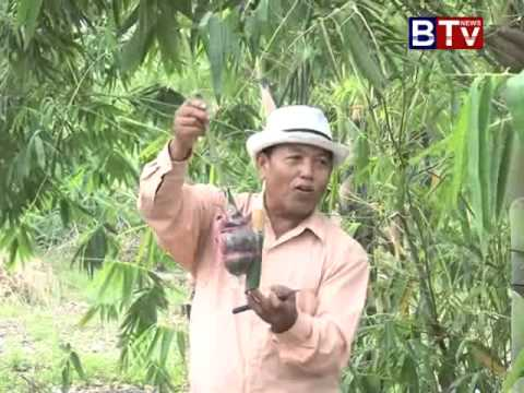 Agriculture farming|cambodia news 2015|cambodia news 1  june  2015|khmer agriculture 2015