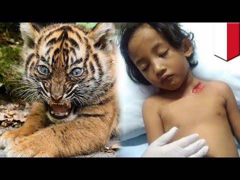 여자어린이, 호랑이 새끼와 사진 찍다 봉변당해