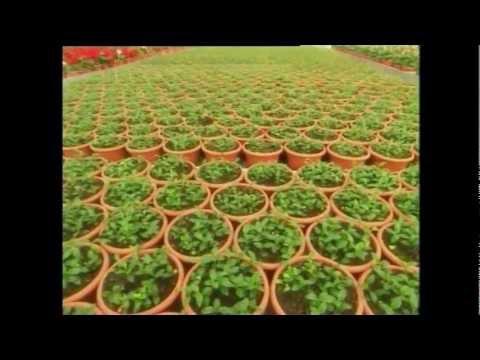 Israeli agriculture - דימיון הפקת סרטים 0544333390