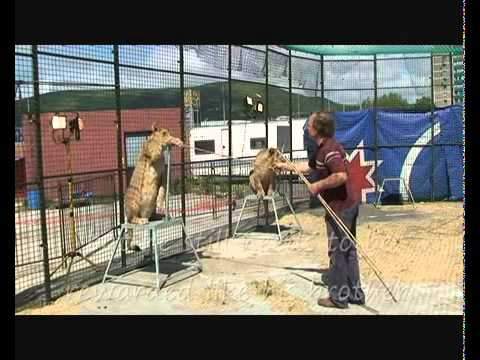 The truth behind circus animal training