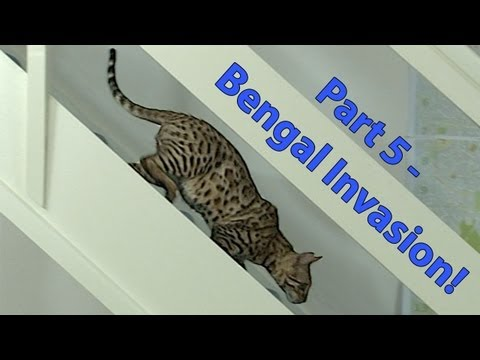 Bengal invasion! First visit downstairs - Part 5