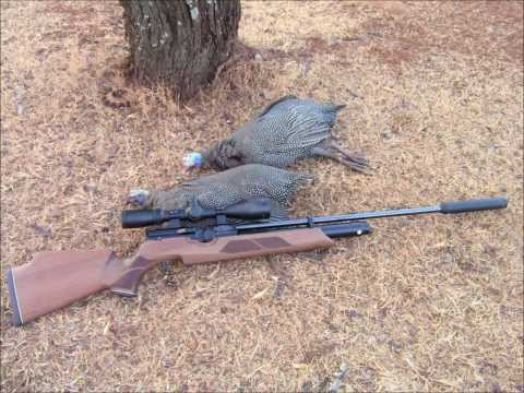 Weihrauch HW100 .20 - Hunting Guinea-fowl