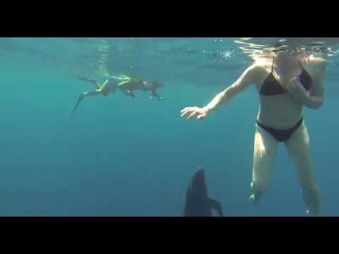 MUST SEE! Wild Pseudo Orcas Seek Interaction with Humans! Costa Rica