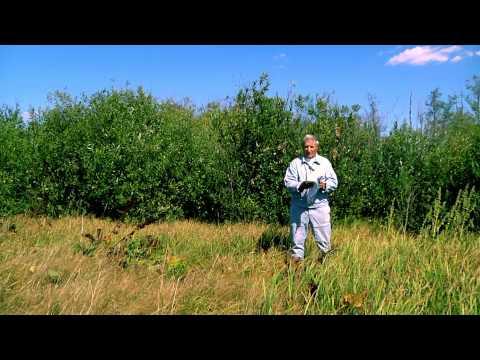 Как оформить землю для пасеки