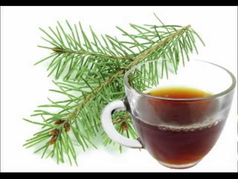 Pine Needle Tea Health Benefits