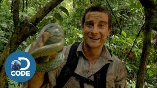 Bear Grylls in Borneo Jungle | Man vs Wild (4/6)