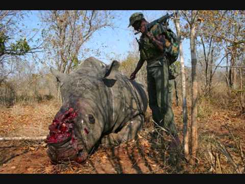 Animales en peligro de extinción Nadia Adilenne Torres Esparza 3