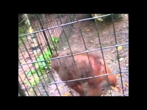 Angry Banana Monkey THUG LIFE - YouTube