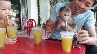 Baby Monkey   Doo And His Family Drink Sugar Cane Juice