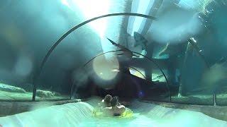 download lagu Shark Tank Water Slide At Siam Park gratis