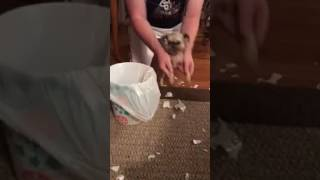 Puppy Cleans Up His Own Mess