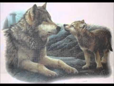 LUPI che animali!!!!! WOLF TRIBUTE