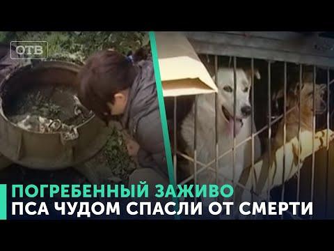 Дворовый пес оказалась заживо погребенным