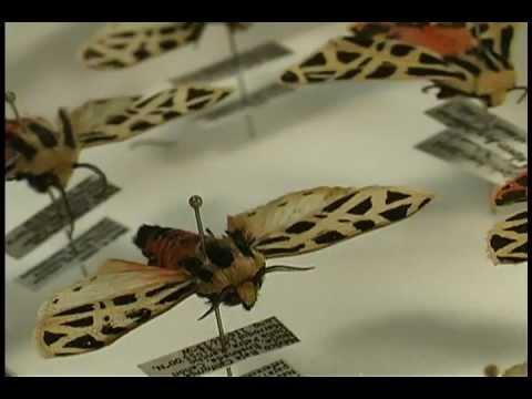 Insectos: especies y su importancia en los ecosistemas