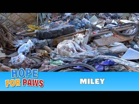 A homeless dog living in a trash pile gets rescued and then...