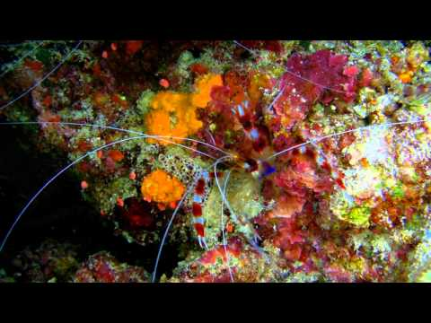 Sudan, Diving, tauchen, red sea, andromeda, scuba, sanyo hd 2000