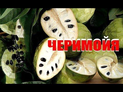 Экзотический фрукт - ЧЕРИМОЙЯ