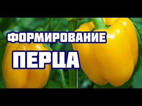 Формирование перца (все тонкости и нюансы формирования болгарского перца)