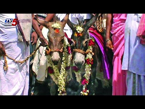 Strange ritual | Villagers Perform Wedding of Donkeys in Medak